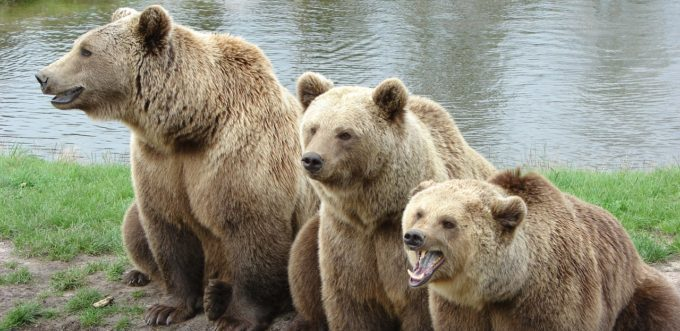 bear-1206881_1280